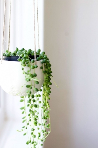 Awesome 1000 Ideas About Indoor Hanging Plants On Pinterest Hanging The Best Small House Plants With 3 Bedrooms Picture