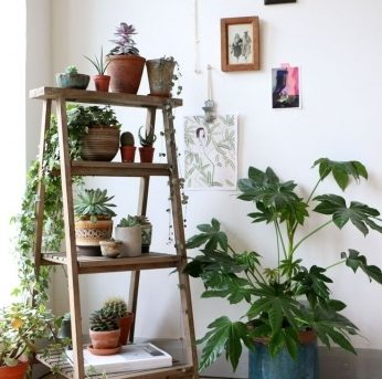 Best 1000 Ideas About Indoor Plant Decor On Pinterest Black Home The Best Small House Plants With 3 Bedrooms Picture