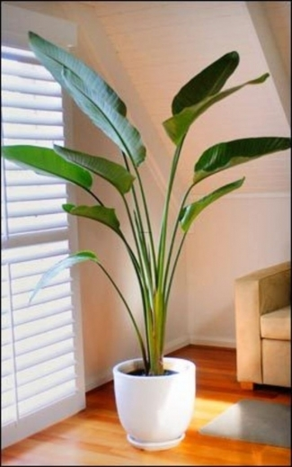 Fantastic 1000 Ideas About Indoor Plant Decor On Pinterest Black Home The Best Small House Plants With 3 Bedrooms Image