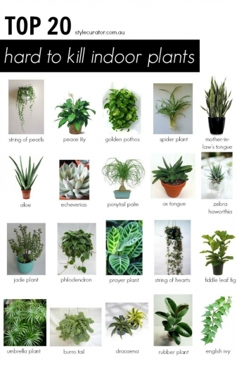 Gorgeous 1000 Ideas About Best Indoor Plants On Pinterest Good The Small House With 3 Bedrooms Picture