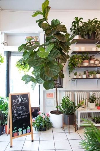 Outstanding 1000 Ideas About Best Indoor Plants On Pinterest Good Indoor The Best Small House Plants With 3 Bedrooms Pic