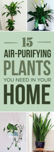 Stylish 1000 Ideas About House Plants On Pinterest Houseplant Plants The Best Small House Plants With 3 Bedrooms Photos