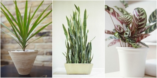 Stylish Low Light Houseplants Plants That Don39t Require Much Light The Best Small House Plants With 3 Bedrooms Pic